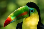 Another thing the Amazon rainforest is important for is the animals that live there