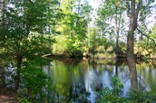 North Carolina's swamp