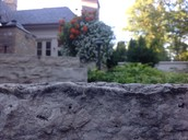 plants and stone