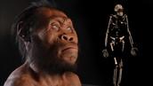 Exctint human ancestors