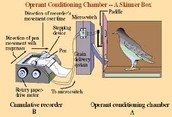 https://www.papermasters.com/bf-skinner-operant-conditioning.html