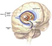 Wat is de ziekte van Parkinson?