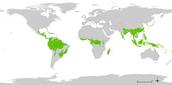 יערות הגשם בעולם
