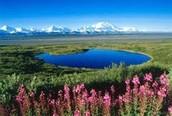 Living the Alaskan Life