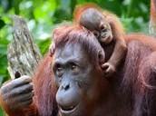 more primates
