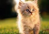 My favorite animal