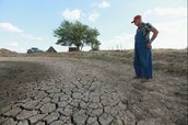 Farmer crops dried up because of a drought.