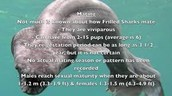 rarest shark recorded shark