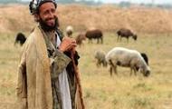 Shepherd       רועה