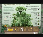 negative and positive impacts humans have on rainforest biomes