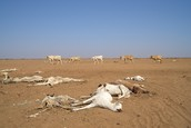 Animals Are Dying In Heat