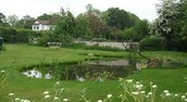 The school pond