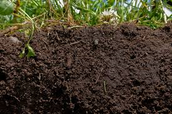 the soils.