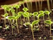 Online Horticulture Judging Contest