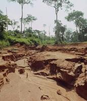 Soil of The  Rain Forest