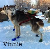 Vinnie!