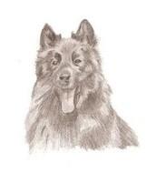 Padfoot (mon chien)
