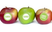 GMO positive and negative results