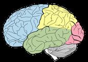 Brain!
