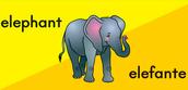 Elephant cognate