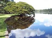 Un Lago En El Parque