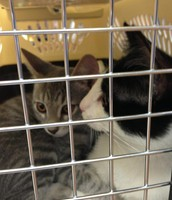 Felix and Lily's First Trip to the Vet