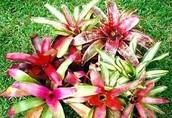 Amazon Plant Life