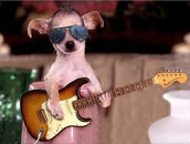 Spoil your pooch today!  Every dog needs a guitar!