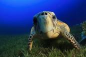 Solutions to saving turtles!
