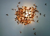 Moths Attracted to Light