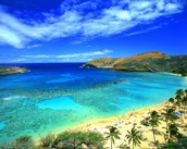 All expense paid trip to Hawaii