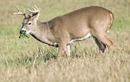 I love hunting.