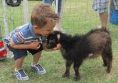 Petting Zoo-
