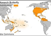 The population around the globe