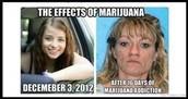 Marijuana pretty people takers