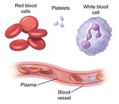 Different Types of Blood