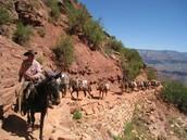 Mule Trips
