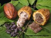 Chocolate Trees