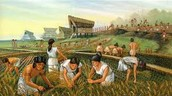 Mesopotamian farming was their main way of getting food.