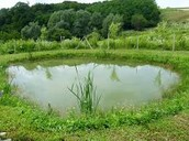 Zarastanje i nestanak kopnenih voda stajaćica
