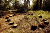 Stump Circle