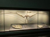 State Fossils