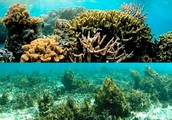 Poisoning Coral Reefs
