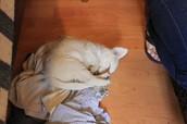 Cachorro callejero