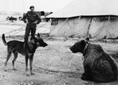 pies vs Wojtek