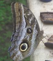 פורים בטבע
