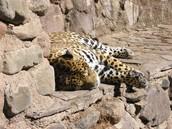 El zoológico del Mendoza