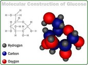 Carbohydrates of Glucose