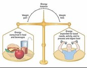 Balance of Nutrition and Exercise