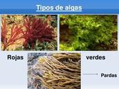 Las Algas